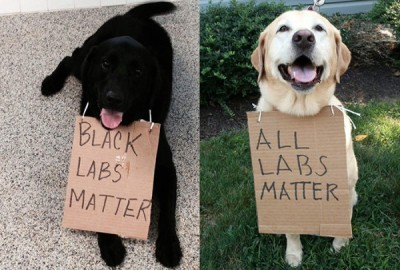 all-labs-matter