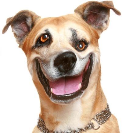 psdog